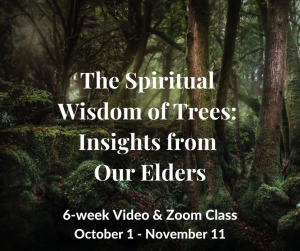 The Spiritual Wisdom of Trees: Insights from Our Elders! @ Online event